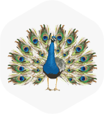 jeesal-logo-slider.png
